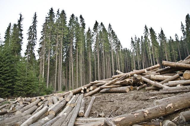 Árvores e desmatamento