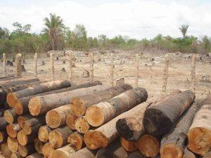 O ambiente natural e o ambiente modificado