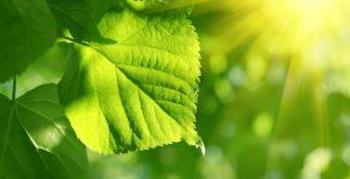Fotossíntese das plantas – O que é e etapas desse processo