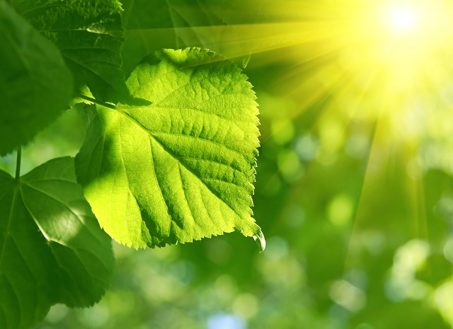 Planta sob o sol