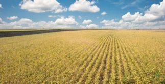 Fronteira agrícola do Brasil