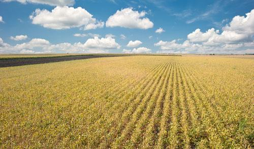fronteira-agricola-do-Brasil