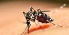 Dengue – O que é, como prevenir e como cuidar