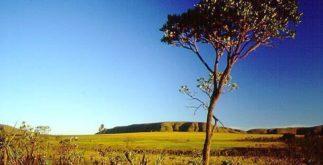Cerrado – Vegetação, solo e bacias hidrográficas