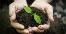 Ecologia – O que é?