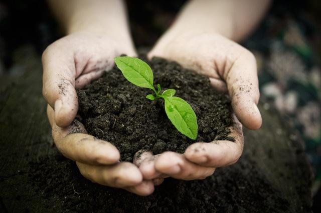 Mão com terra e planta