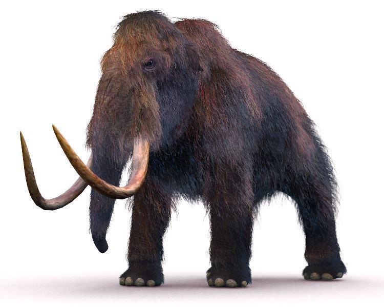 Mamute – Que bicho foi esse?