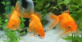 Peixes – Características desse animal aquático