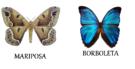Borboleta e mariposa – Qual a diferença?