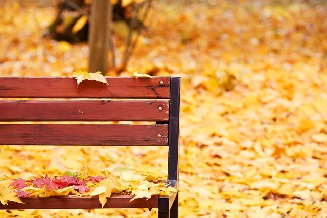 Folhas caídas em banco