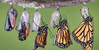 Metamorfose das borboletas