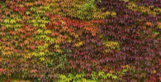 Por que as folhas mudam de cor?