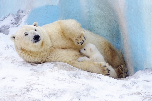 Mamãe ursa com filhote