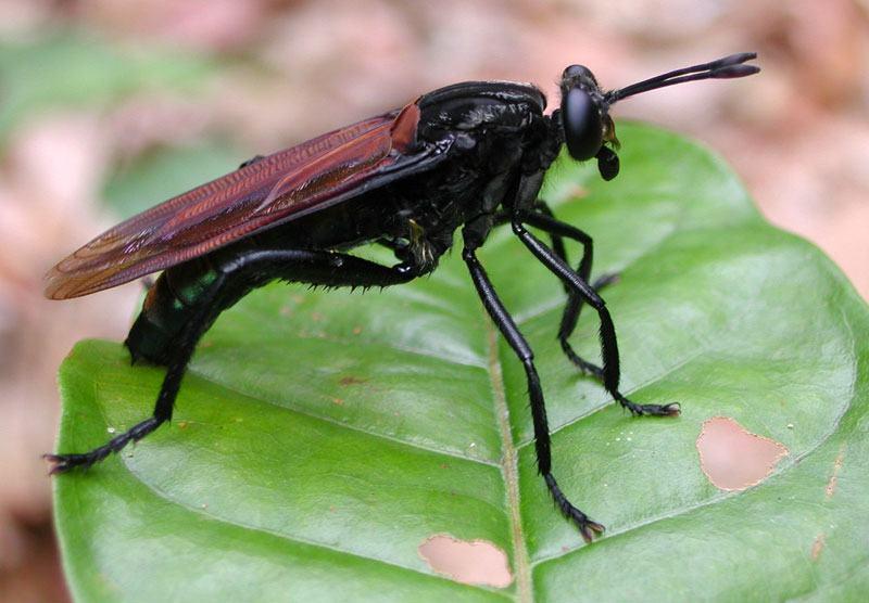 Importância dos insetos