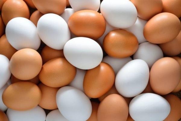 Por que os ovos das galinhas têm cor diferente?