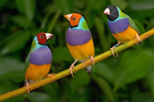 O universo das aves na Terra