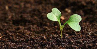 Agricultura orgânica: um sistema de produção natural