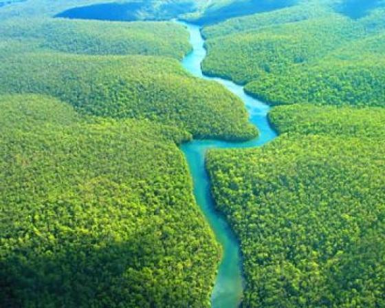 Biodiversidade é o que mantém o equilíbrio da Terra estável