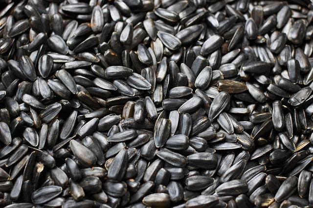 Germinação da semente: entenda o processo