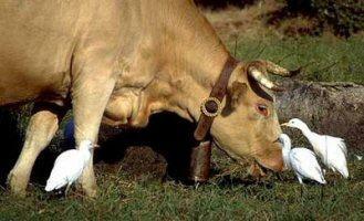 No mutualismo, os animais têm uma relação em que um ajuda o outro
