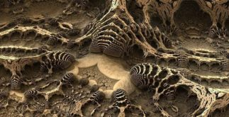 O estudo dos fósseis