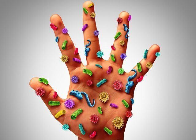 Saiba qual a importância das bactérias