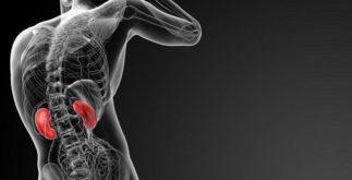 Aprenda mais sobre as funções e características dos rins