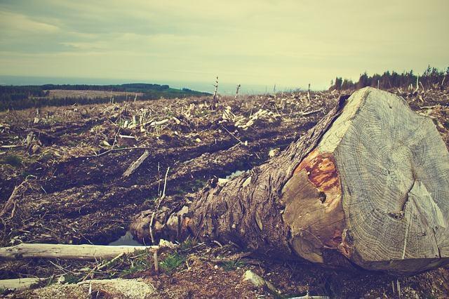 Desmatamento no Brasil: o verde perdendo espaço