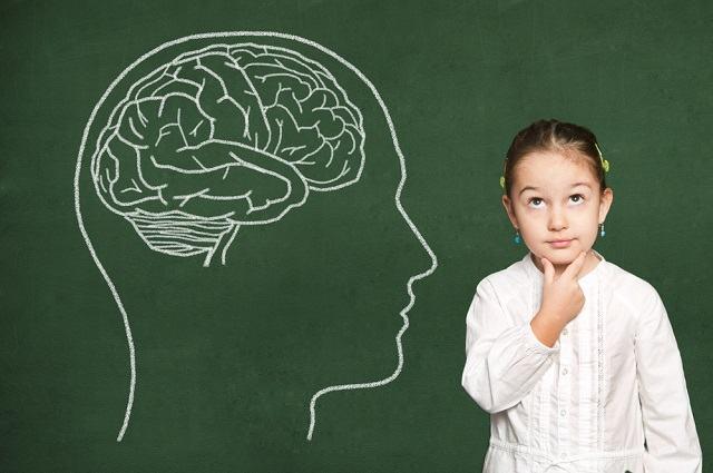 Aprenda sobre a estrutura do encéfalo e suas funções