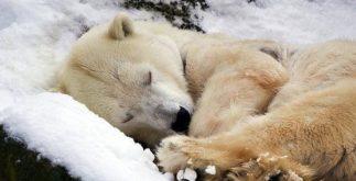 O que é hibernação?
