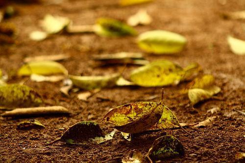 Como é produzido o cheiro de terra molhada?