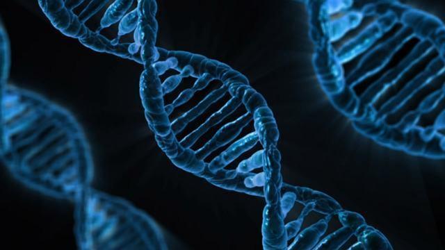 DNA: 'a molécula da vida'