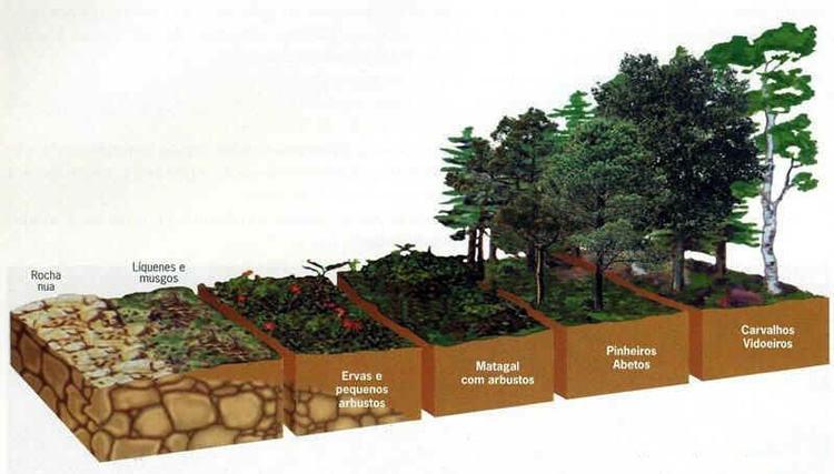 O processo de sucessão ecológica