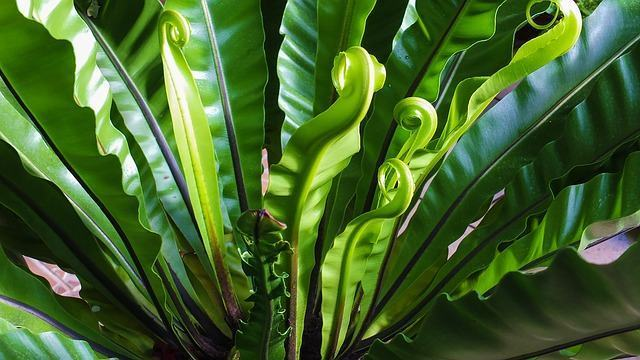 A produção de oxigênio pelas algas e árvores