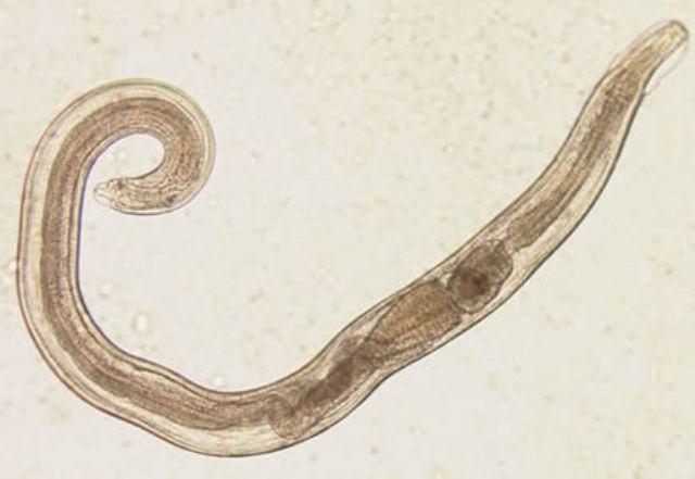 Do que processar a terra na estufa de parasitas