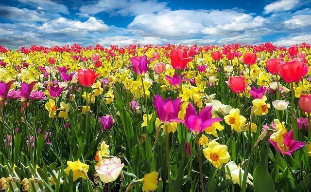 Por que as flores têm cor e perfume?