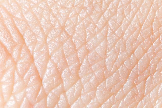Resultado de imagem para pele humana