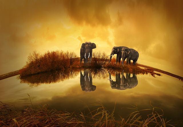 Zoologia: o estudo relacionado aos animais