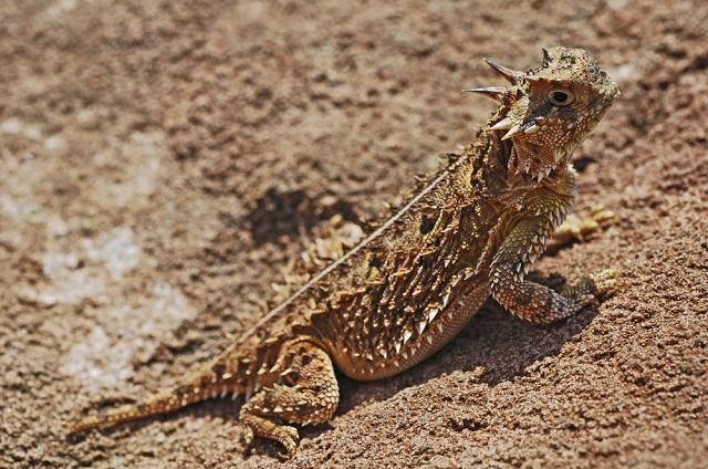 conheca-os-animais-considerados-os-mais-nojentos-do-planeta lagarto