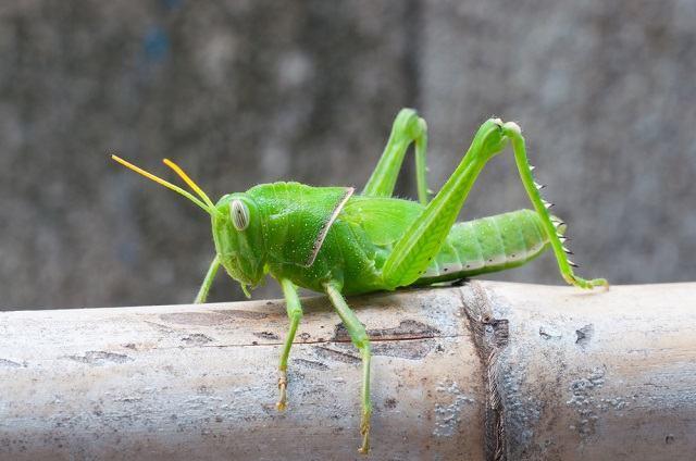 Como funciona o sentido da visão nos invertebrados