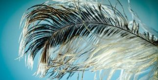 Aprenda sobre as características e composição das penas