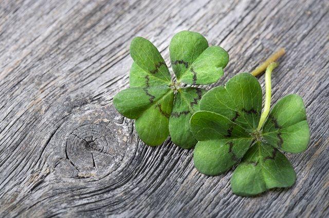 O que são e para que servem os amuletos da sorte? - Trevo de Quatro Folhas