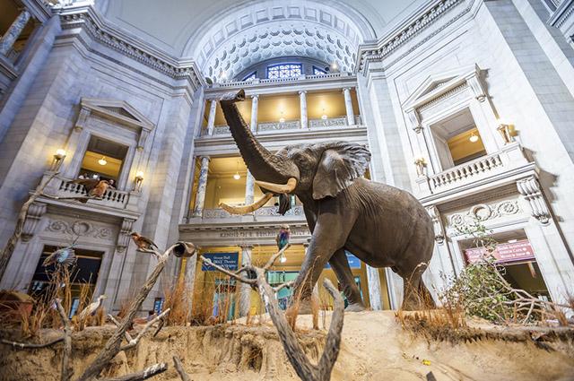 O Museu Nacional de História Natural foi fundado em 1910
