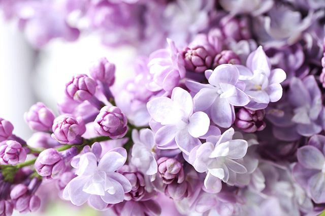 O mistério que envolve os diversos tons da cor lilás é bem explorado em ambientes de meditação
