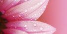 Quais são os tons da cor rosa
