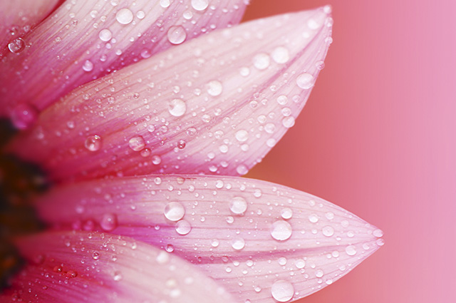 Os tons da cor rosa são apreciados pela moda e decoração de ambientes e eventos