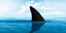 Tubarão: É possível sobreviver ao seu ataque?