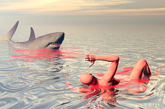 Os banhistas são as presas mais recorrentes dos tubarões