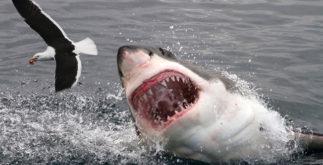 Tubarão: Por que eles atacam pessoas em Recife (PE)?