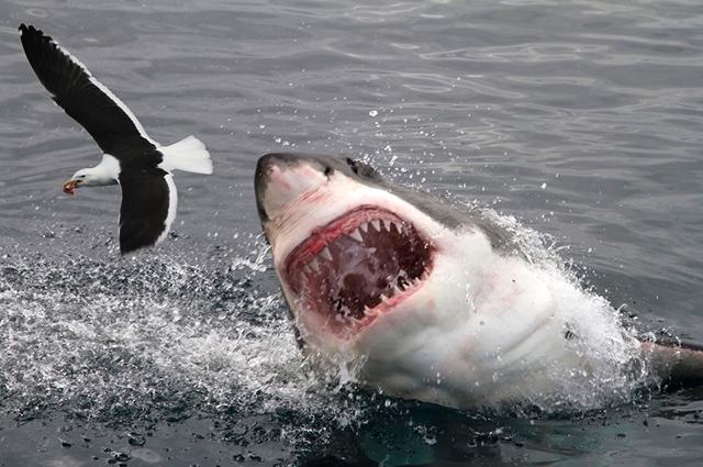Os tubarões atacam pessoas em Recife -PE devido a interferência humana na vida marinha